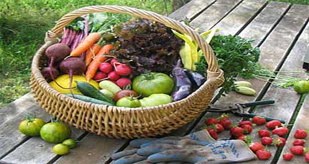 Organic-food-significantly-lowers-pesticide-exposure
