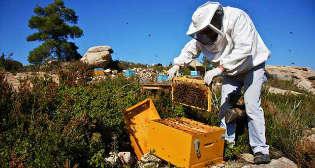 pesticide brings honeybees to their knees