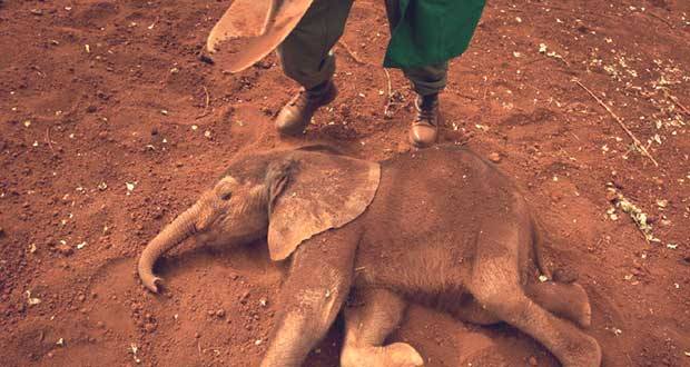 Can-Drones-Save-Kenyas-Elephants-From-Poaching