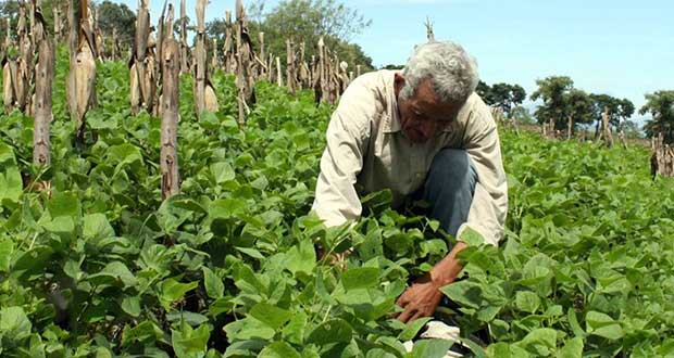 El-Salvador-DO-NOT-WANT-to-use-GM-seeds
