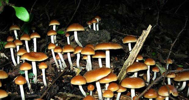 How psychedelic mushrooms open your mind