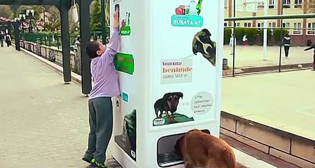 This-Machine-Feeds-Stray-Dogs-in-Exchange-for-Bottles
