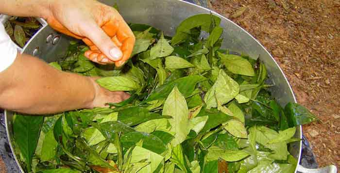 Chemical Found In Ayahuasca May Be Able To Completely Reverse Diabetes