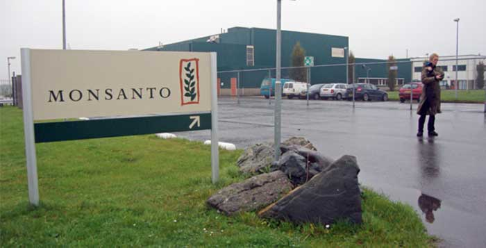 Monsanto Hit With Fine for 'Genetically Contaminating Wheat Supply'