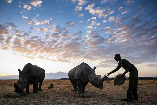 Rangers-protect-3-of-the-last-remaining-northern-white-rhinos-in-the-world-65