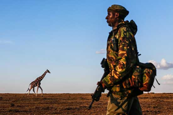 Rangers-protect-3-of-the-last-remaining-northern-white-rhinos-in-the-world