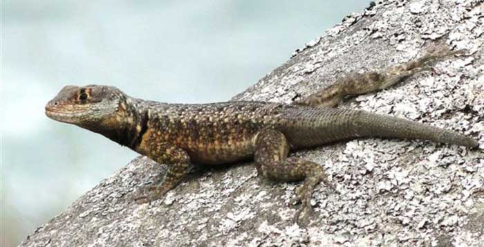 1-in-6-species-in-danger-of-extinction-over-climate-change-Study