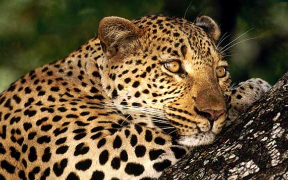 Costa-Rica-Becomes-First-Latin-American-Country-to-Ban-Hunting-for-Sport1