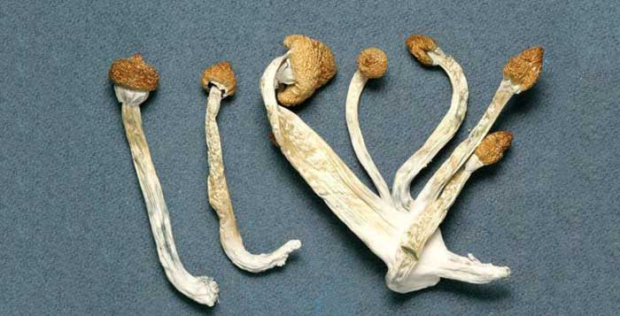 Magic Mushrooms - Can Improve Long Term Psychological Well Being