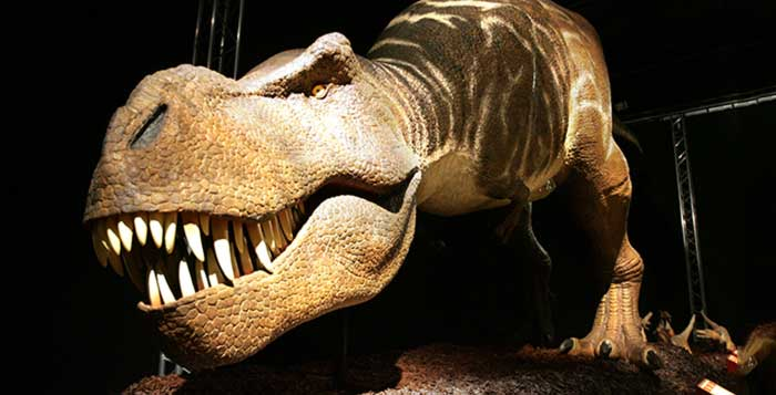 Accidental-discovery-of-blood-collagen-in-dinosaur-bones-could-rewrite-textbooks