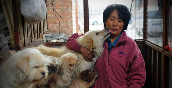 Save 100 Dogs From Chinese Dog-Eating Festival