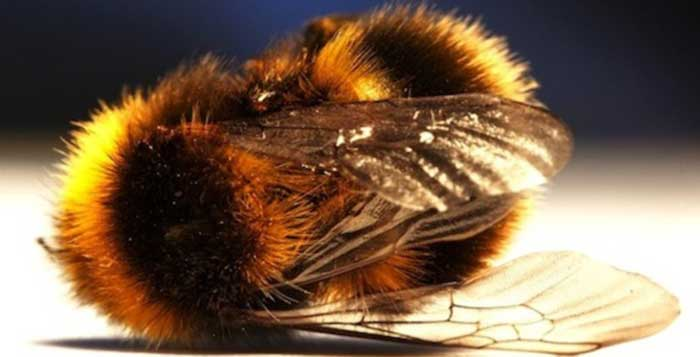 Harvard Study Proves Why The Bees Are All Disappearing