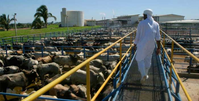 Animals-Seized-BECAUSE-He-Cared-For-Them-Better-Than-A-Factory-Farm