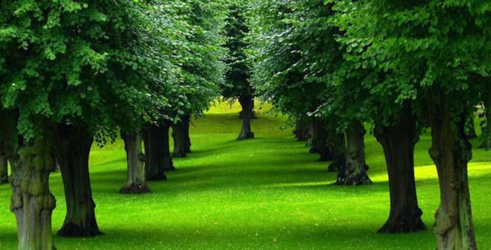 How-Living-in-Nature-Proves-to-Be-Great-for-Health