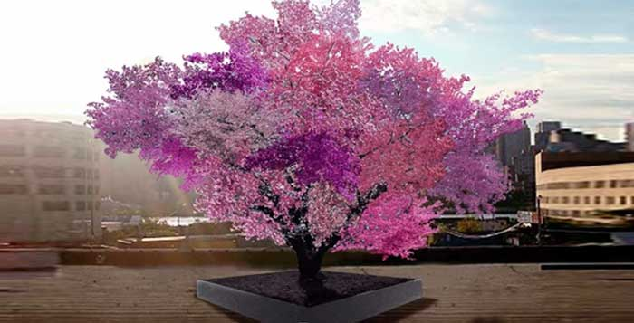 Magic-tree-Multi-blossom-hybrid-grows-40-different-kinds-of-fruit