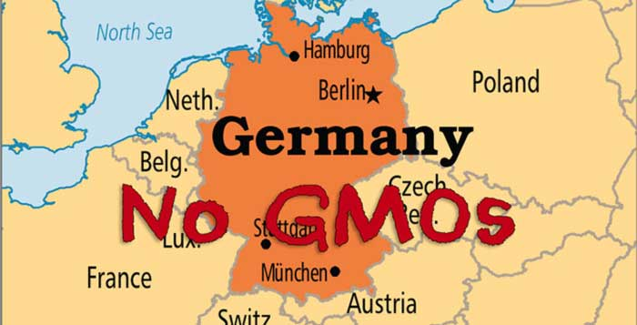 Germany Follows Scotland's Lead And Opts To Ban GMOs