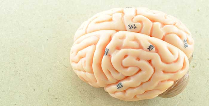 Scientists have figured out how to grow a human brain in a lab. Well, almost. The creation is that of scientists from Ohio State University.