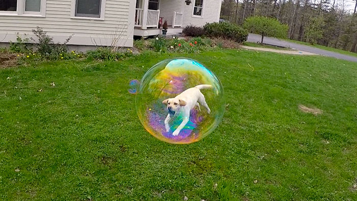 Perfectly Timed Pics 14