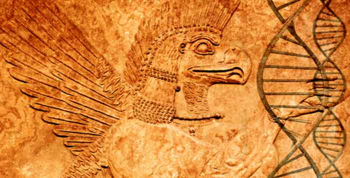 Humans With Blood Type Rh Negative Belong To An Extraterrestrial Lineage