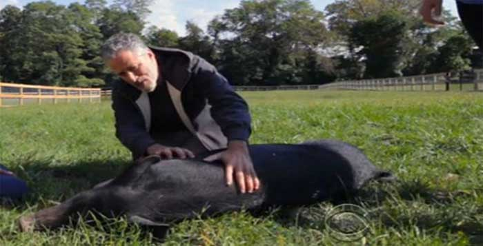Jon-Stewart-Quits-Comedy-Starts-Animal-Sanctuary-to-Rescue-Abused-Factory-Farm-Animals