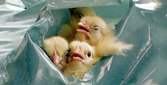21 Things The Egg Industry Does Not Want You To See