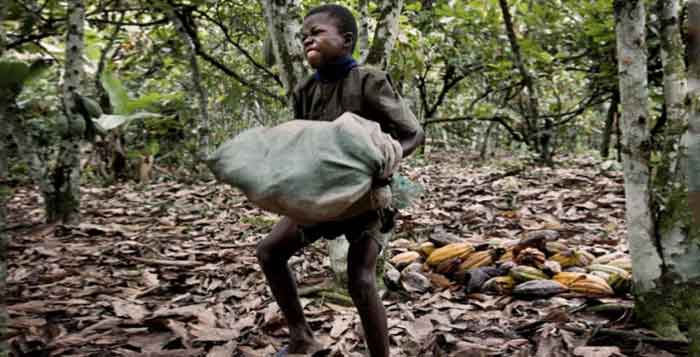 Former-Child-Slaves-Used-in-Cocoa-Production-Can-Sue-Nestle