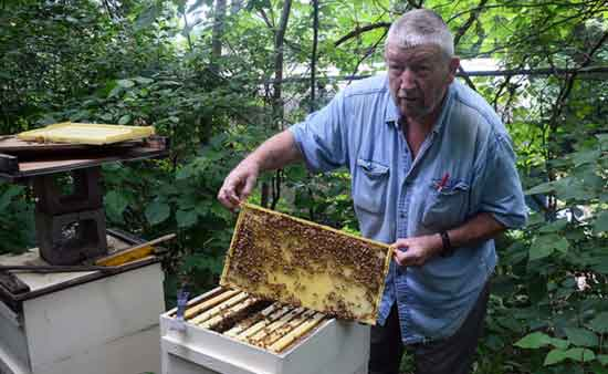 Pesticides Kill Bees Cause Cancer a