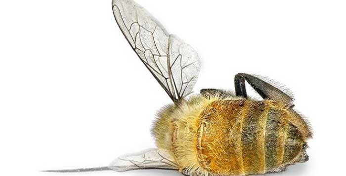 Pesticides Kill Bees Cause Cancer