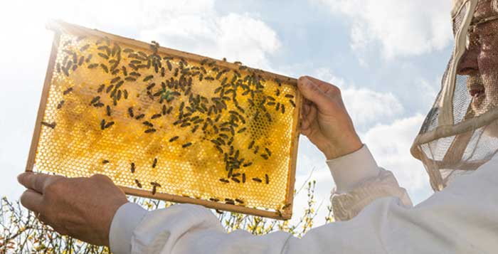 How Some Hotels are Creating Rooftop Bee Sanctuaries to Help Bee Populations