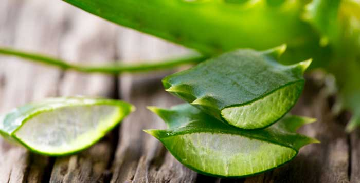 What Aloe Vera Does In Your Body