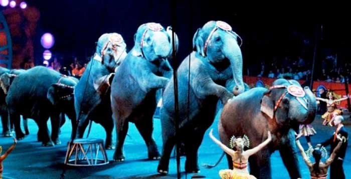 Iran Becomes 9th Country To Ban Animal Acts In Circuses