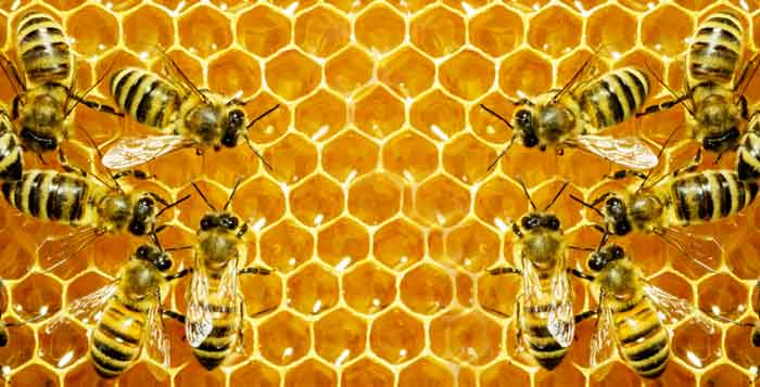 Maryland Makes History by Banning Bee-Killing Pesticide