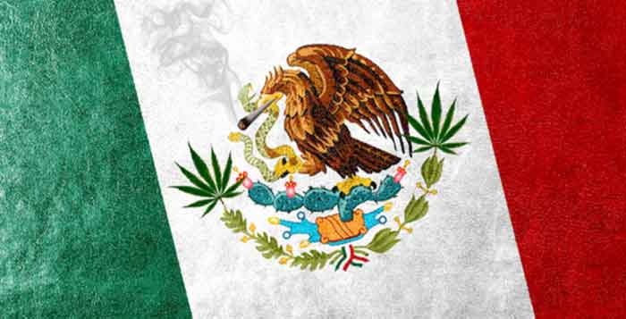 Mexico Rules Consumption and Cultivation of Cannabis is a Fundamental Human Right