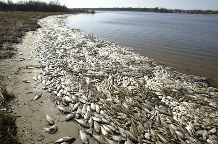 All Of A Sudden Fish Are Dying By The Millions All Over The Planet