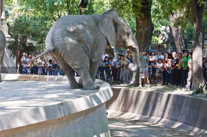Buenos Aires To Close Its Zoo Because Captivity Is Degrading