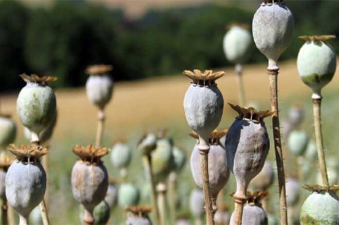 US War In Afghanistan Is Fueling Global Heroin Epidemic Enabling The Drug Trade