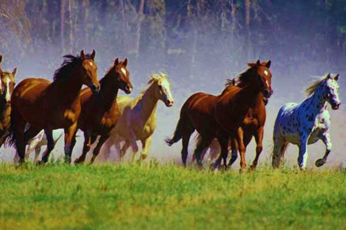 Bureau of Land Management to Slaughter 44000 Wild Horses to Make Room for Beef Cattle