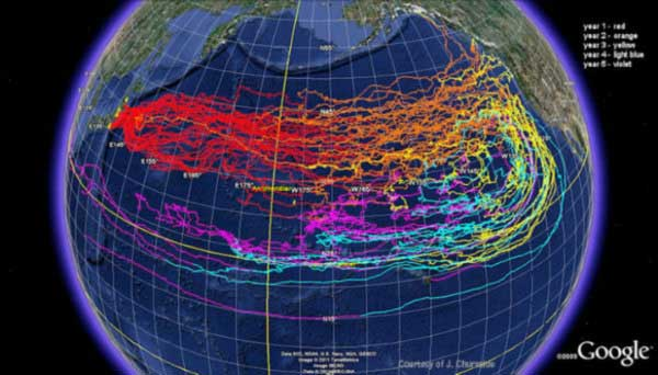 Beware High Radioactive Levels Have Taken Over the Pacific