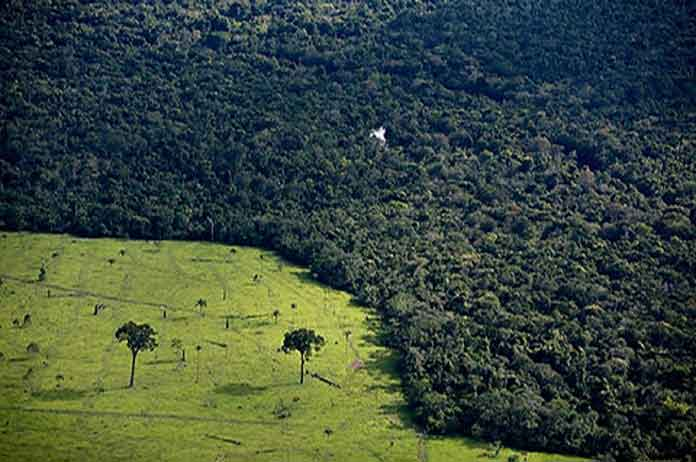 What's Being Done to the Amazon