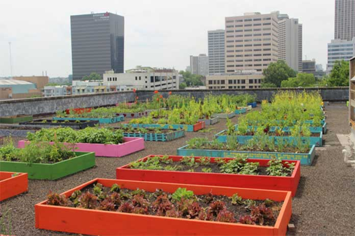 Shelter Residents Get Organic