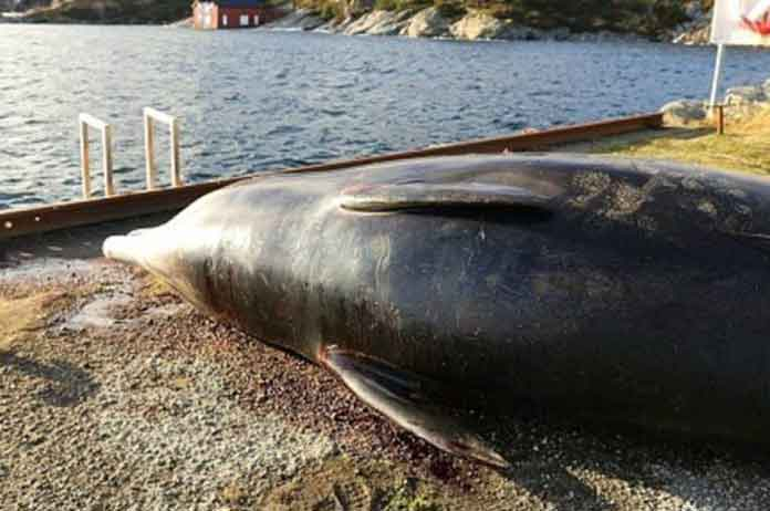 Stranded Whale Found Dead With 30+ Plastic Bags in Its Stomach