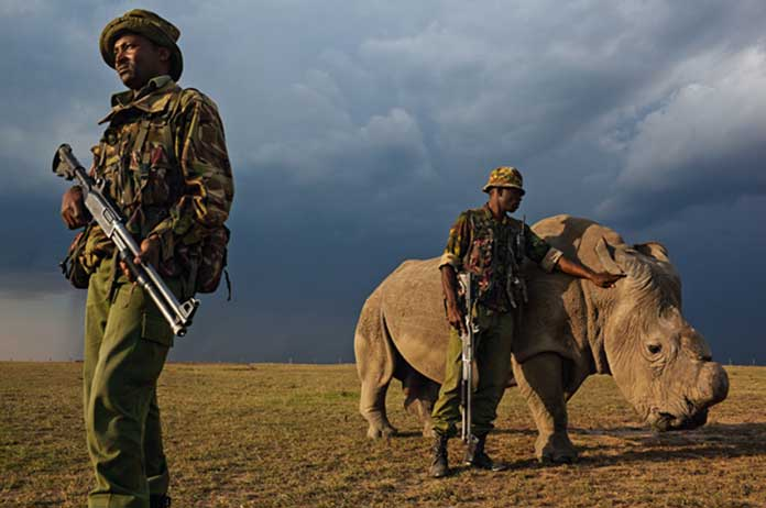 To Protect Rhinos, This National Park Shoots Poachers