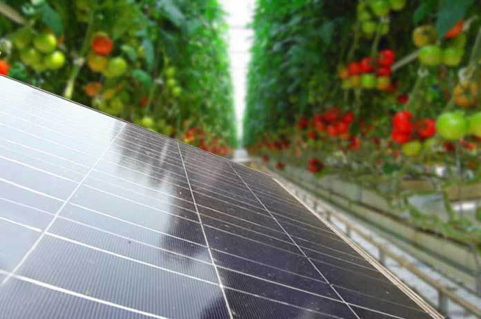 Solar Panel Farm Grows 17,000 Tons of Food Without Soil
