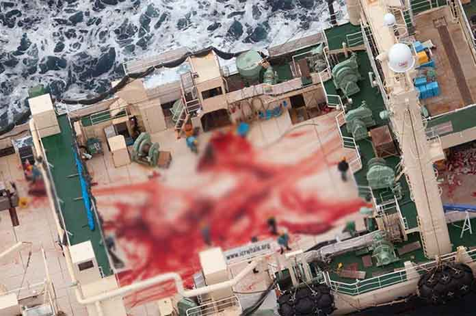 Whale Slaughterhouse Has Been Found