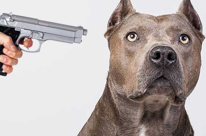 Cop Ignores Beware of Dog Signs Enters Yard Kills Family Dog Over a Parking Spot