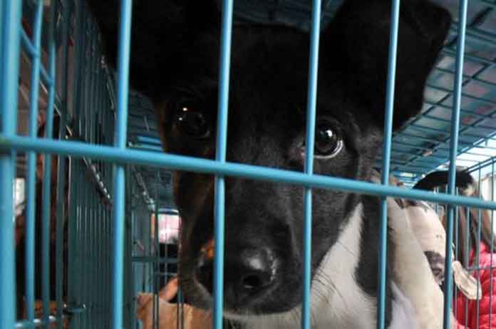 Taiwan Bans Slaughter Of Cats And Dogs For Human Consumption