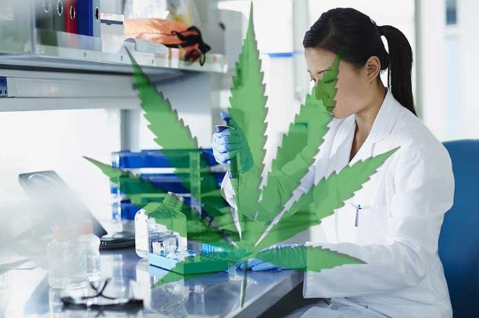 There Are Now 100 Scientific Studies Proving Cannabis Cures Cancer
