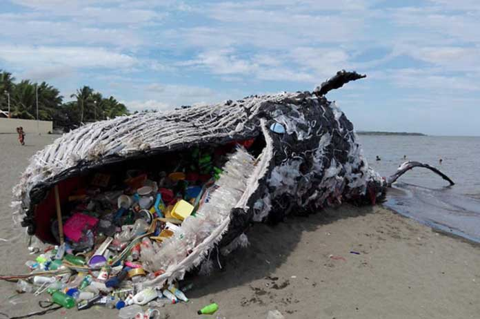 Giant Dead Whale Is Haunting Reminder of Massive Plastic Pollution Problem