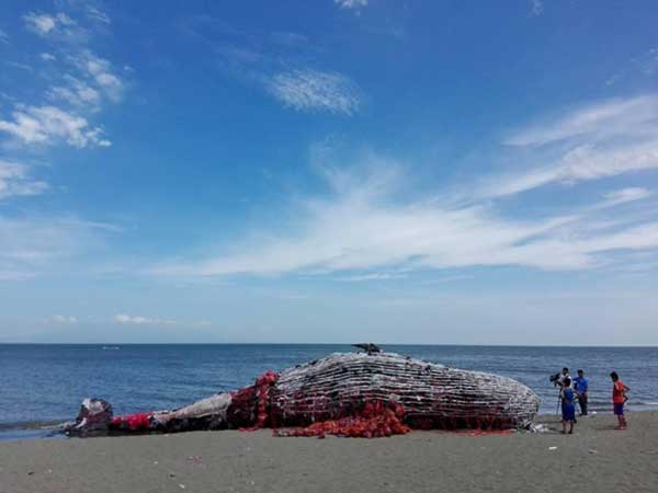 Giant Dead Whale Is Haunting Reminder of Massive Plastic Pollution Problem 1