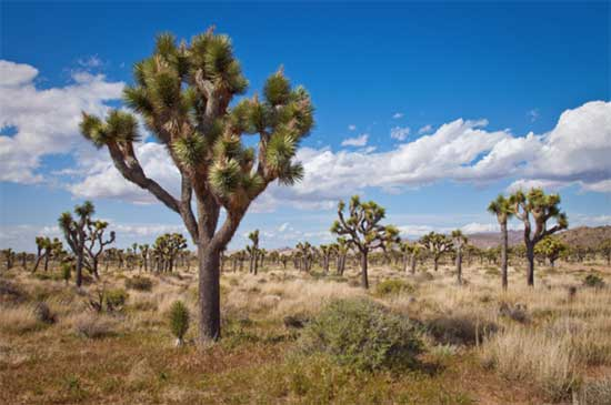 Newly Discovered Hidden Forests In The Desert Could Be Key To Stopping Climate Change